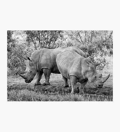 Rhinos Photographic Print