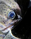 Fish Eye by Corri Gryting Gutzman