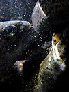 Something is Fishy... by Corri Gryting Gutzman