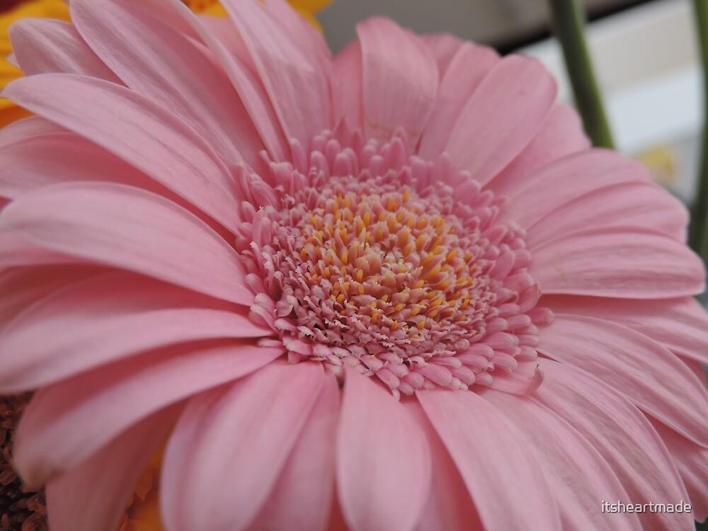 Pink Gerbera  by itsheartmade