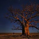 Stars at the Dinner Tree by Robyn Lakeman