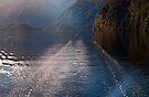 Mid Morning on Doubtful Sound by Odille Esmonde-Morgan