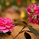 Bokeh Bloom by MNDustyLens