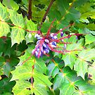Beauty and the Beast - Leatherleaf Mahonia by kcd-designs