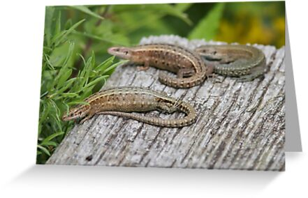 Common Lizards by shaftinaction