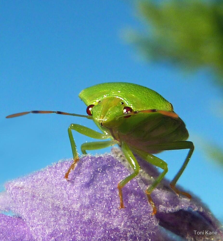 Stinkin Bug..... by Toni Kane