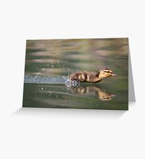 Mallard Duckling Greeting Card
