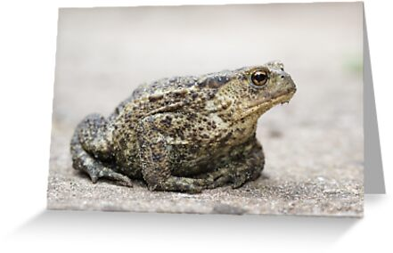 Common Toad by shaftinaction