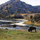 Catalina Buffalo by Randy Sprout