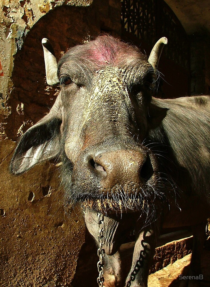 Water Buffalo with Dye on Head by SerenaB