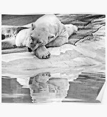 Lone Polar Bear Poster