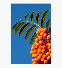 Orange tabs Photographic Print