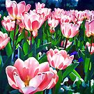 Pink Tulips by kcd-designs