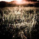Dying Light by Josephine Pugh