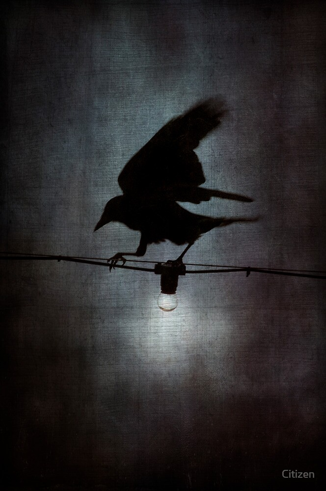 By crow light by Nikki Smith (Brown)