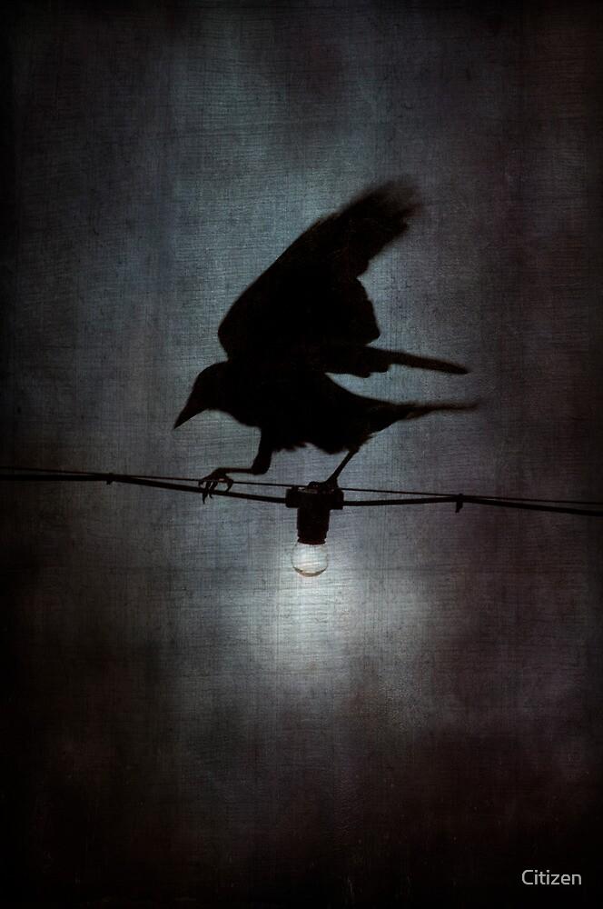 By crow light by Nikki Smith