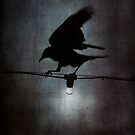 By crow light by Nikki Smith