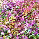 """""""Pastel Ground Cover"""" by kcd-designs"""