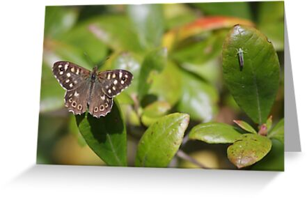 Speckled Wood Butterfly by shaftinaction