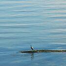 heron on the ocean by Klaus Bohn