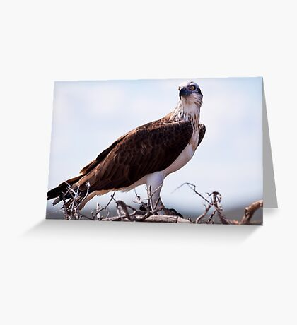 """""""Guarding Over"""" Greeting Card"""