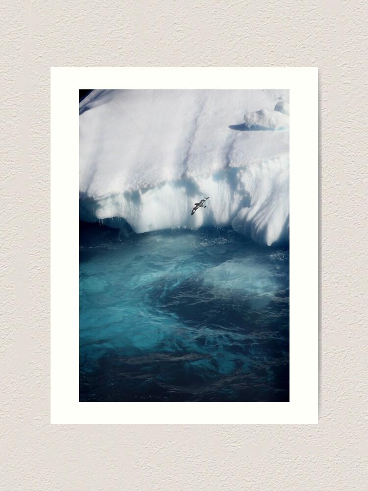 Alternate view of Antarctic bird Art Print