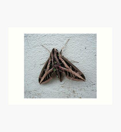 Sphinx Moth After Rain Art Print