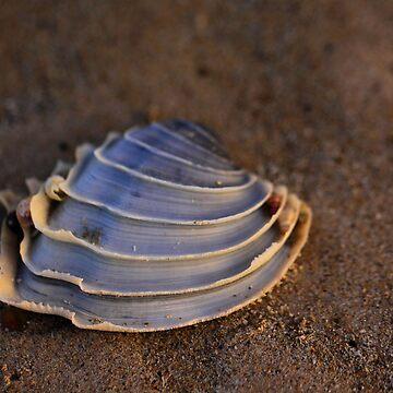 Seashell by ClaireBear