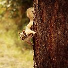 Friendly Squirrel   Peterson Beach by Tamara Brandy