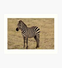 Africa Continues - Stripey Perfection Art Print