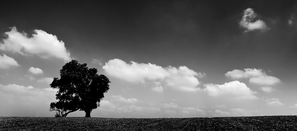 standing alone tree by Victor Bezrukov