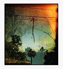 Stick Photographic Print