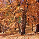 Looking Forward To The Colors Of Fall by CarolM