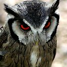 Owl by Kevin Meldrum