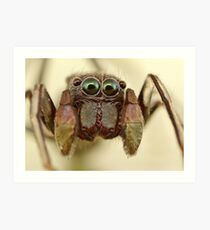 ant mimic jumping spider Art Print