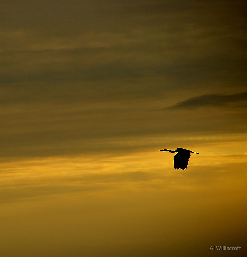 Coastal sky and heron by Al Williscroft