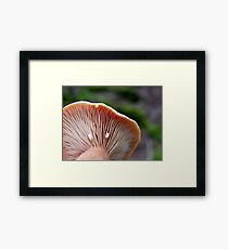 Milk Cap Mushroom (Lactarius) Framed Print