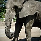 Pleasantly Pleased Pachyderm by Edward J. Laquale