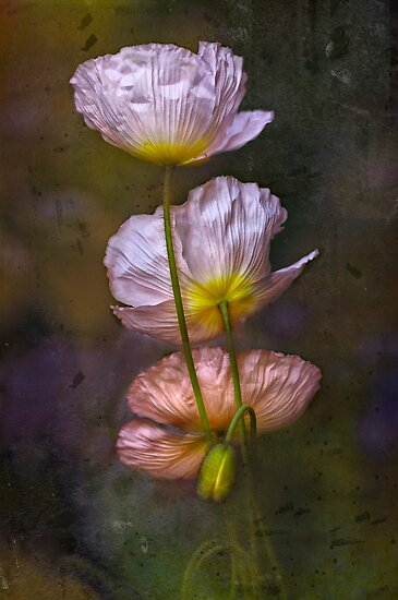 Poppies on Parade by Dianne English