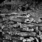 Cat and Logs by DExPIX