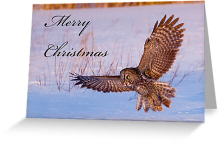 Christmas Card - Great Gray Owl 2 by Michael Cummings