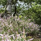 Delicate Heather Landscape by lissygrace