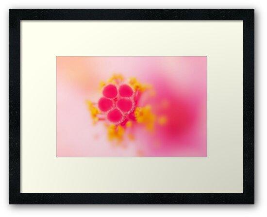 blush by Ingrid Beddoes