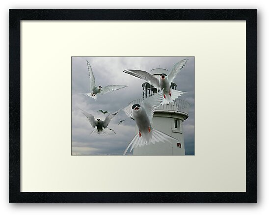 Tern Attack by Brian Tarr