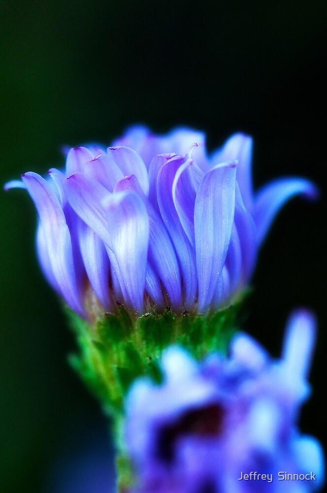 Blue wild flower by Jeffrey  Sinnock