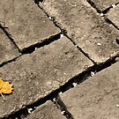 Little Leaf  by Allison  Flores