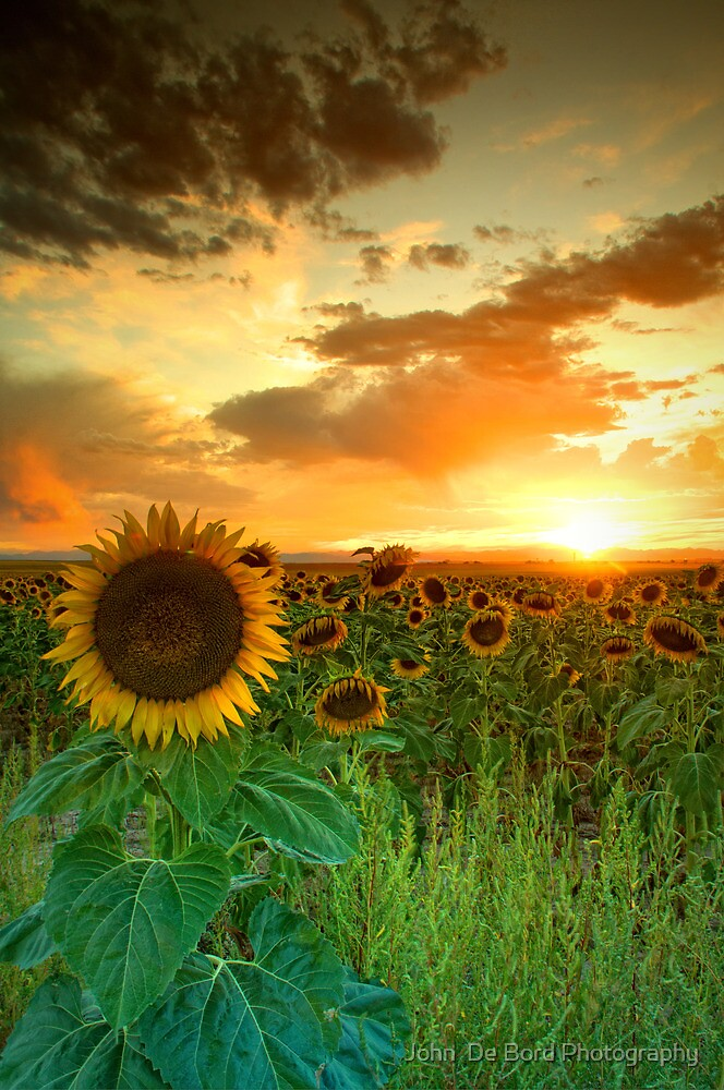 The Sunworshiper by John  De Bord Photography