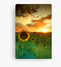 The Sunworshiper Canvas Print