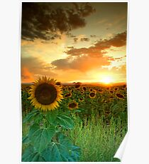 The Sunworshiper Poster