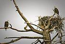 Bald Eagle Tree by Joe Elliott